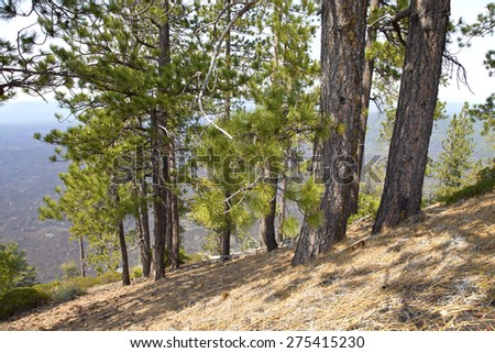 Lava Butte forest trees and hillside near Bend Oregon. - stock photo
