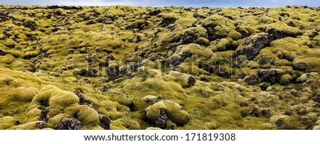 Lava field and lava rocks covered by the moss, Ipanorama celand - stock photo