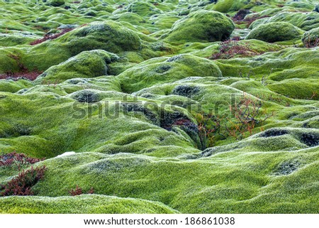 lava fields with moss covered lava rocks - stock photo