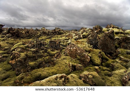 Lava rocks popping out of the moss on Iceland