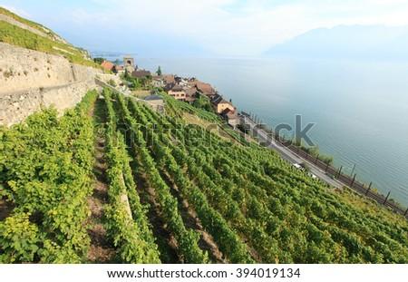 Lavaux vineyards, unesco world heritage, Switzerland - stock photo