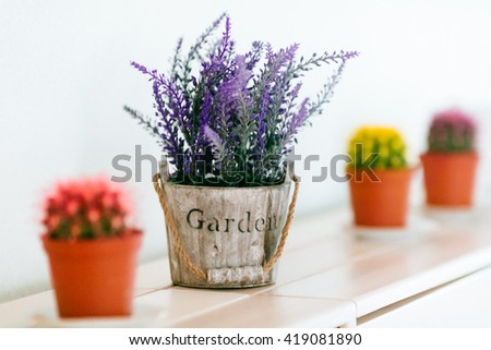 Lavender and succulents in a pots on the shelf