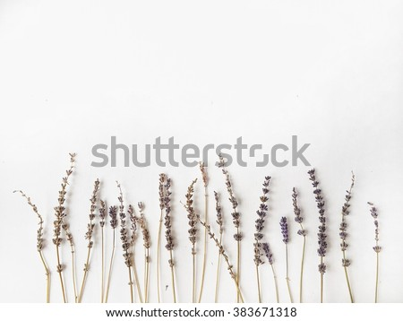 Lavender at white background, top view - stock photo