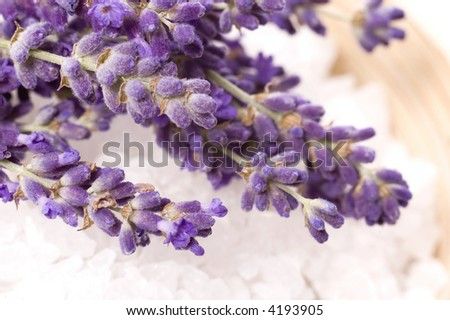 lavender bath items isolated on the white backround. fresh flowers and salt.