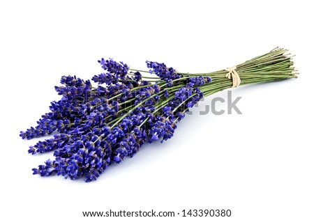 Lavender bouquet isolated - stock photo