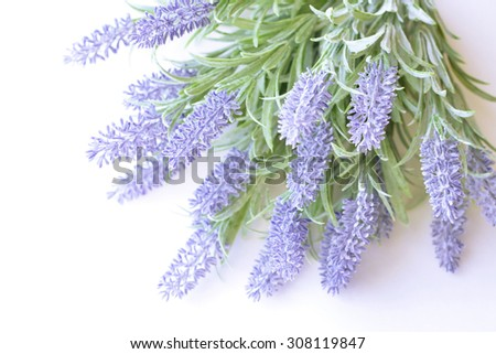 Lavender branch isolated on a white background