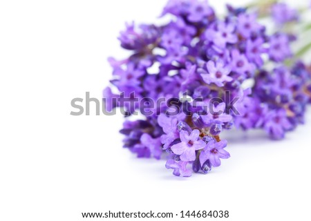 Lavender bunch on white background. Copy space. Macro shot - stock photo