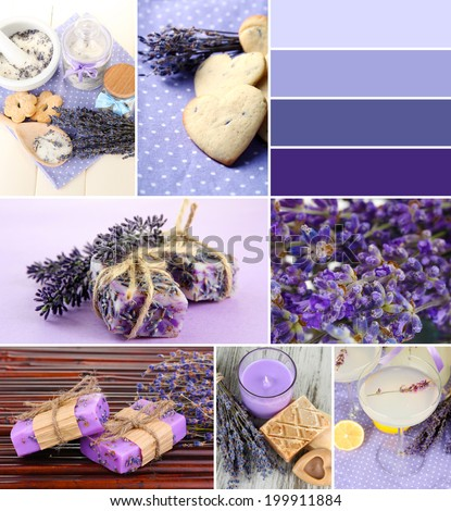Lavender collage - stock photo