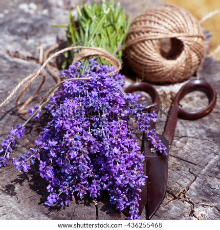 Lavender. Collecting lavender. Bundle of lavender, ribbon  and vintage scissors. Aromatherapy - stock photo