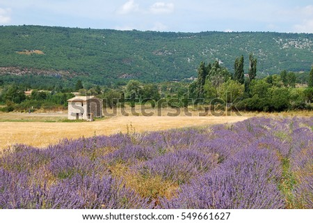 Lavender dream in France