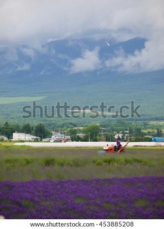 Lavender farm Kamifurano/Hokkaido,Japan - stock photo