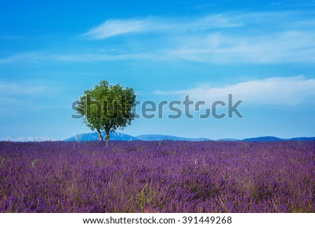 Lavender field and tree with summer blue sky and clouds, France, retro toned - stock photo