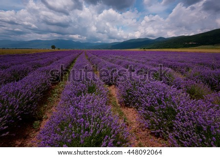 Lavender field at the end of June, near Kazanlak, Bulgaria - stock photo