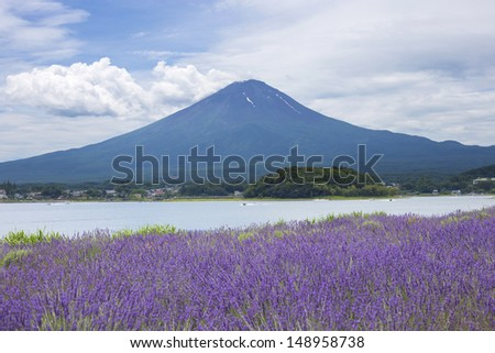 Lavender field on the bank of lake Kawaguchi with Mt. Fuji as background - stock photo