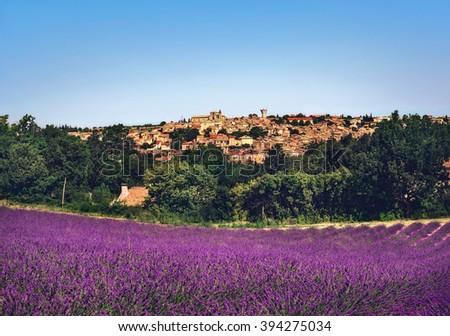 Lavender field. Plateau de Valensole, France - stock photo