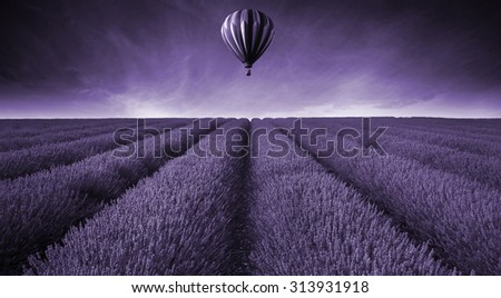Lavender field Summer sunset landscape with hot air balloon toned in monochrome - stock photo