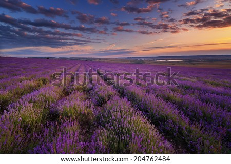 Lavender field under blue sky with clouds on sunset - stock photo