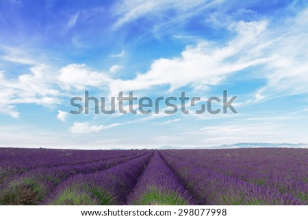 Lavender field with summer blue sky and clouds, France - stock photo