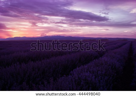 Lavender fields. Beautiful image of lavender field. Summer sunset landscape, contrasting colors. Dark clouds, dramatic sunset - stock photo