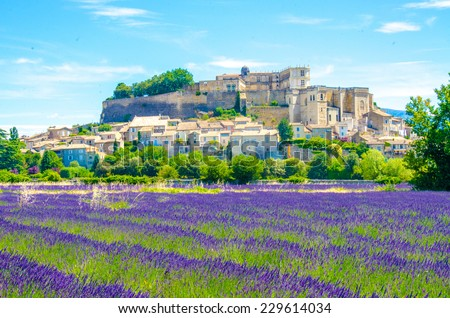 Lavender fields in France - stock photo
