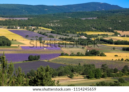 Lavender fields in the vicinity of the city Aurel. Provence. France