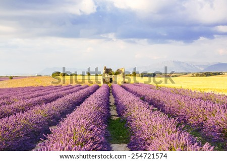 Lavender fields near Valensole in Provence, France on sunset. Beautiful view on rows and provencal houses. Popular place for traveling and tourists in summer. - stock photo