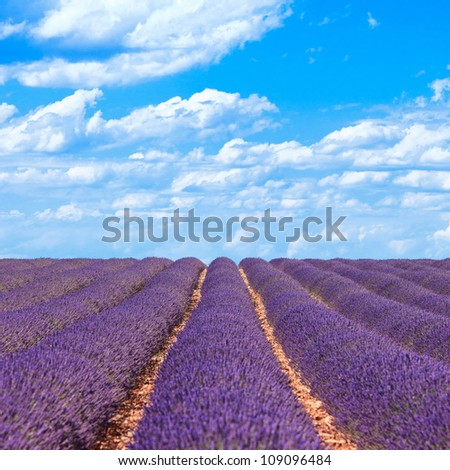 Lavender flower blooming scented fields in endless rows and a blue cloud sky. Landscape in Valensole plateau, Provence, France, Europe. - stock photo
