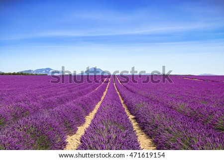 Lavender flower blooming scented fields in endless rows and mountain on background. Valensole plateau, provence, france, europe.