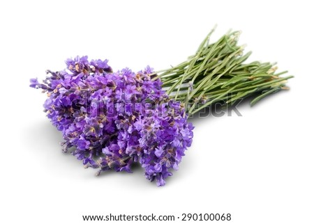 Lavender, Flower, Lavender Coloured.