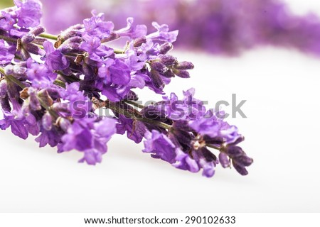 Lavender, Flower, Spa Treatment.