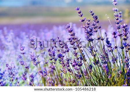 herb garden stock images, royaltyfree images  vectors  shutterstock, Natural flower