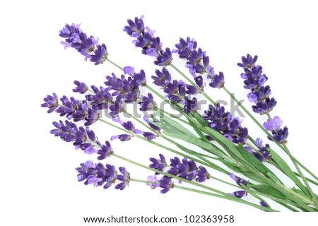 Lavender flowers against white background.