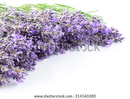 Lavender flowers background.  - stock photo