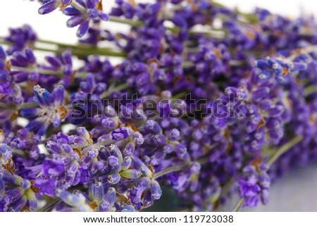 Lavender flowers close-up