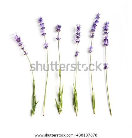 Lavender flowers collection