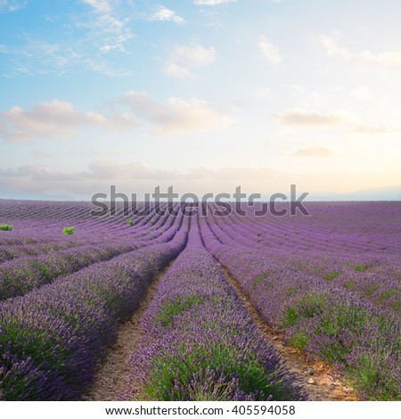 Lavender flowers field rows with summer blue and pink sunset sky, Provence, France - stock photo