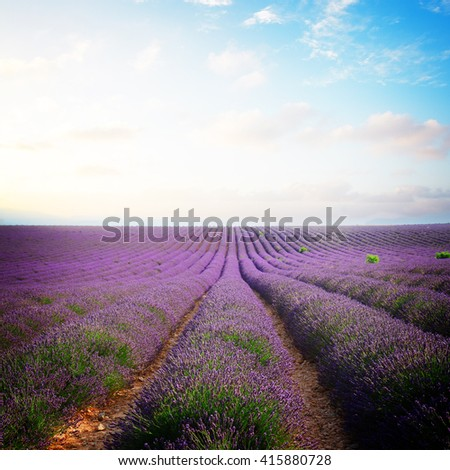 Lavender flowers field rows with summer blue and pink sunset sky, Provence, France, toned - stock photo