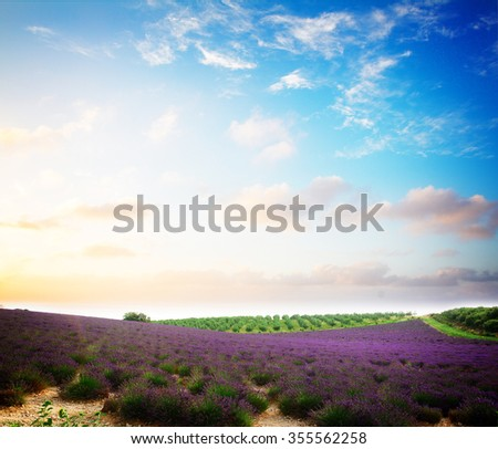 Lavender flowers field with summer blue and pink sunset sky, Provence, France, retro toned - stock photo