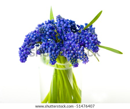 lavender flowers in a glass of water on a white background