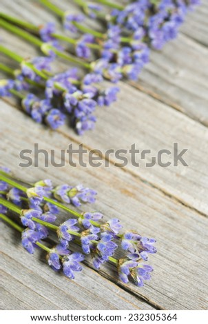 lavender flowers in a row on old wood texture background - stock photo