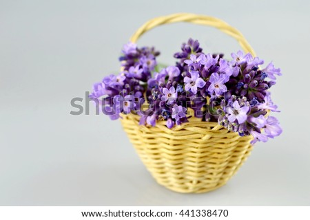 Lavender flowers in basket - stock photo