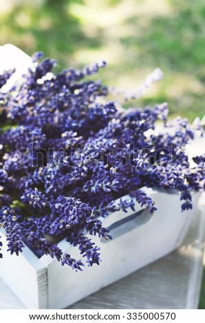 Lavender flowers in white tray - stock photo