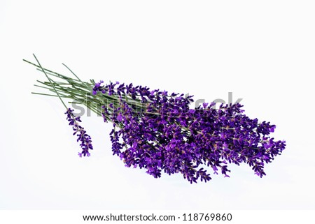 lavender flowers isolated against white background. purple summer flowers.