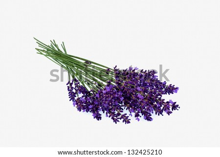 lavender flowers isolated against white background. purple summer flowers. - stock photo
