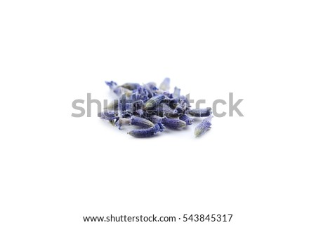 Lavender flowers isolated on a white