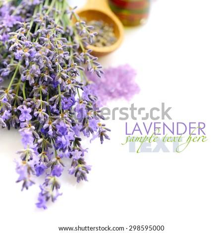 Lavender flowers (Lavandula) on a white background - stock photo