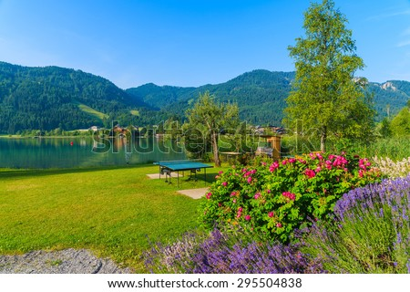 Lavender flowers on green grass on shore of Weissensee alpine lake in summer landscape, Austria - stock photo