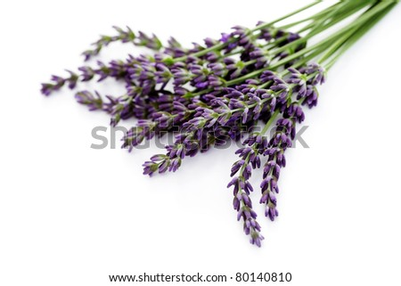 lavender flowers on white background - flowers and plants