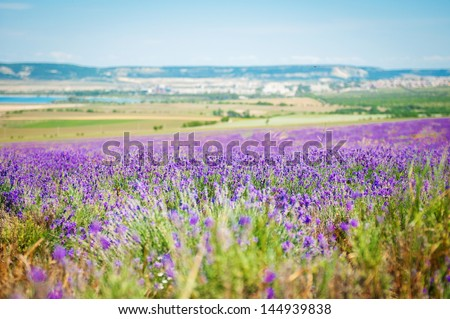 lavender flowers - Sunset over a summer purple lavender field . fragrant field of the lavender. Landscape in Valensole plateau, Provence, France, Europe. - stock photo