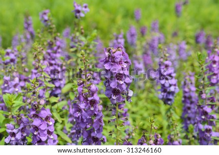 Lavender Flowers with blurred background - stock photo